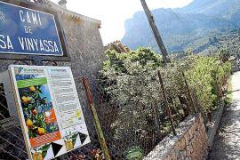 Die Genossenschaftszentrale mit dem neuen Museum und die Öko-Finca liegen am Camí de Sa Vinyassa.
