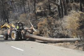 Wegen umgestürzter Bäume und Steinschlaggefahr ist die Landstraße gesperrt.