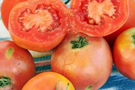 Vergessene Tomatenkultur