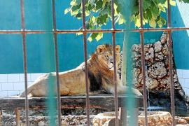 Safari Zoo auf Mallorca plant nach Kritik Verbesserungen
