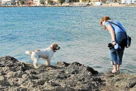 Erlaubt: Am Strand von Es Carnatge in Palma dürfen Vierbeiner ohne Leine ins Wasser gehen.