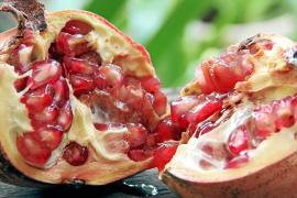 Die Frucht der Erkenntnis