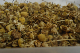 Kamillenblüten werden unter anderem zur Herstellung von Kräuterschnaps genutzt.