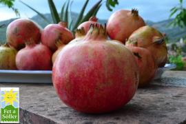 Frische Granatäpfel - direkt von unserer Lieblingsinsel