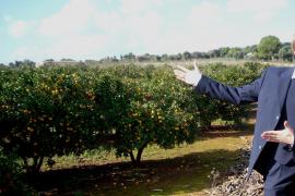 Mallorca-Vitamin-C-Spritze für Reisebüromitarbeiter