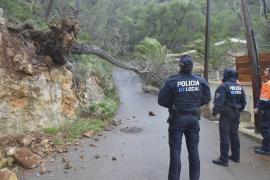 Sturm warf Bäume um und schlug Boot leck