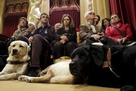 Hunde im Balearen-Parlament