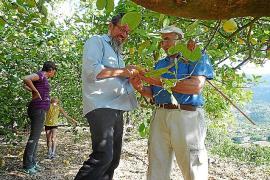 Die Ernte und weitere Verarbeitung der Früchte spricht Christoph Hafner (l.) in enger Kooperation mit den Partnern auch auf der