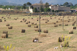 Urlaub bei Schaf, Schwein und Kuh?