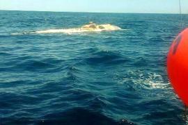Toter Wal vor Sóller gefunden