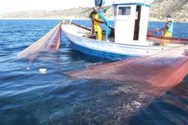 Frischer Fisch aus dem Meer