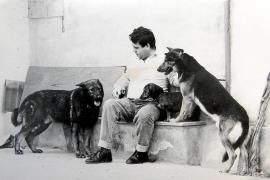 Mallorcas Mauerhunde