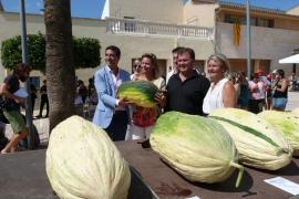 Die dickste Melone: Die Siegerlandwirte und Lokalpolitiker beim Wettbewerb in Vilafranca.