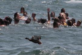 Als das Entenwerfen in Can Picafort illegalerweise mit lebenden Tieren begangen wurde.  Archivfoto aus dem Jahre 2008.