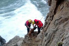 Feuerwehr rettet Hund an Steilküste