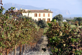 """Inhaberin Viktoria Garten betreibt auch einen Weinversand und das Degustationslokal """"Vindega"""" am Rheinufer in Düsseldorf."""