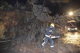 Die Feuerwehr räumt die Küstenstraße zwischen Andratx und Estellencs im Südwesten von Mallorca von den umgestürzten Bäumen frei.