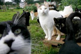 Tierschützer kämpfen für Katzenkolonie