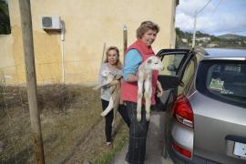 Die Anwohnerinnen transportieren die Milchlämmer in ihren Autos ab.