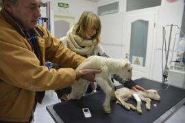 Beim Veterinär wurden die Tiere gewogen und durchgecheckt.