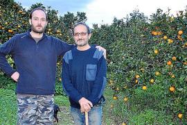 Wie sich Orangen-Bauer Juan Picornell durchschlägt