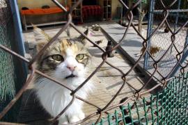 Tierschutzverein bittet um Spenden