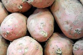 mercado moniato patata dulce  mercado moniato patata dulce rojo