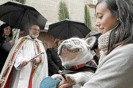 Die Tiersegnungen auf Mallorca sind ein Spektakel, das man einmal gesehen haben muss.