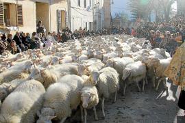 In Muro kam eine ganze Schafherde zur Segnung.