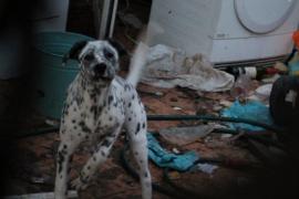 Die Hunde in Calvià leben offenbar umgeben von Müll.