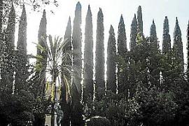 Lineare Pflanzung von Kerzenzypressen in Pollença.
