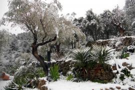 Fünf Zentimeter Schnee gingen bei Puigpunyent in den Bergen nieder.