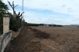 Solarpark bei Manacor soll kleiner werden
