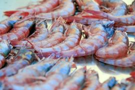 Die Rote Gamba ist auf Mallorca eine gefragte Delikatesse.