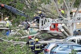 Mitarbeiter der Gemeindeverwaltung Calvià zersägten den Baum und räumten die Unfallstelle auf.