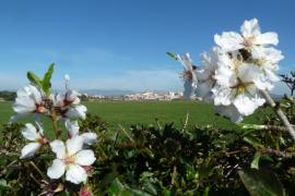 Der Frühling ist zurück auf Mallorca