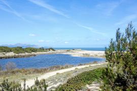 Beeindruckendes Bild: Die Dünenlandschaft bei Son Serra de Marina.