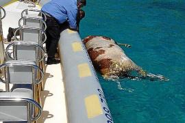 Tote Kuh aus dem Meer gefischt