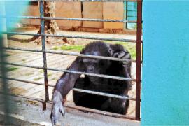 Behörden nehmen Safari-Zoo unter die Lupe