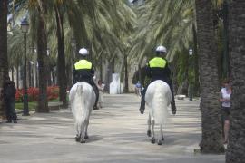 Die Palmenallee am Paseo Sagrera vor dem Lonja-Viertel.