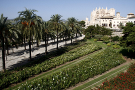 Palmas Palmenhain im Parc de la Mar vor der Kathedrale.