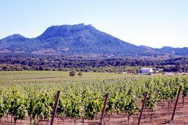 Mallorcas Wein- und Pferdeparadies