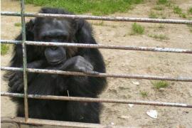 Prüfbericht entlastet Safari-Zoo