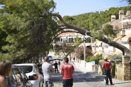 Baum ab in Sant Elm