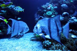Award für Palma Aquarium