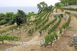Das 100 Hektar große Anwesen auf Mallorca verfügt über eigenes Rebland.