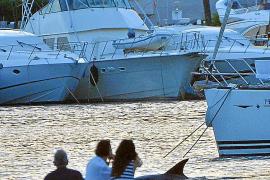 Bootsgäste schossen aus nächster Nähe Fotos von dem Delfin.