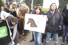 Pferd totgeprügelt: Mann muss ins Gefängnis