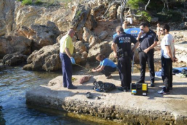 Totes Delfinbaby an die Küste gespült