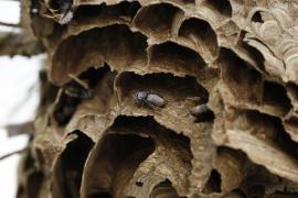 Für die wissenschaftliche Untersuchung wurde die Insektenbehausung tiefgefroren